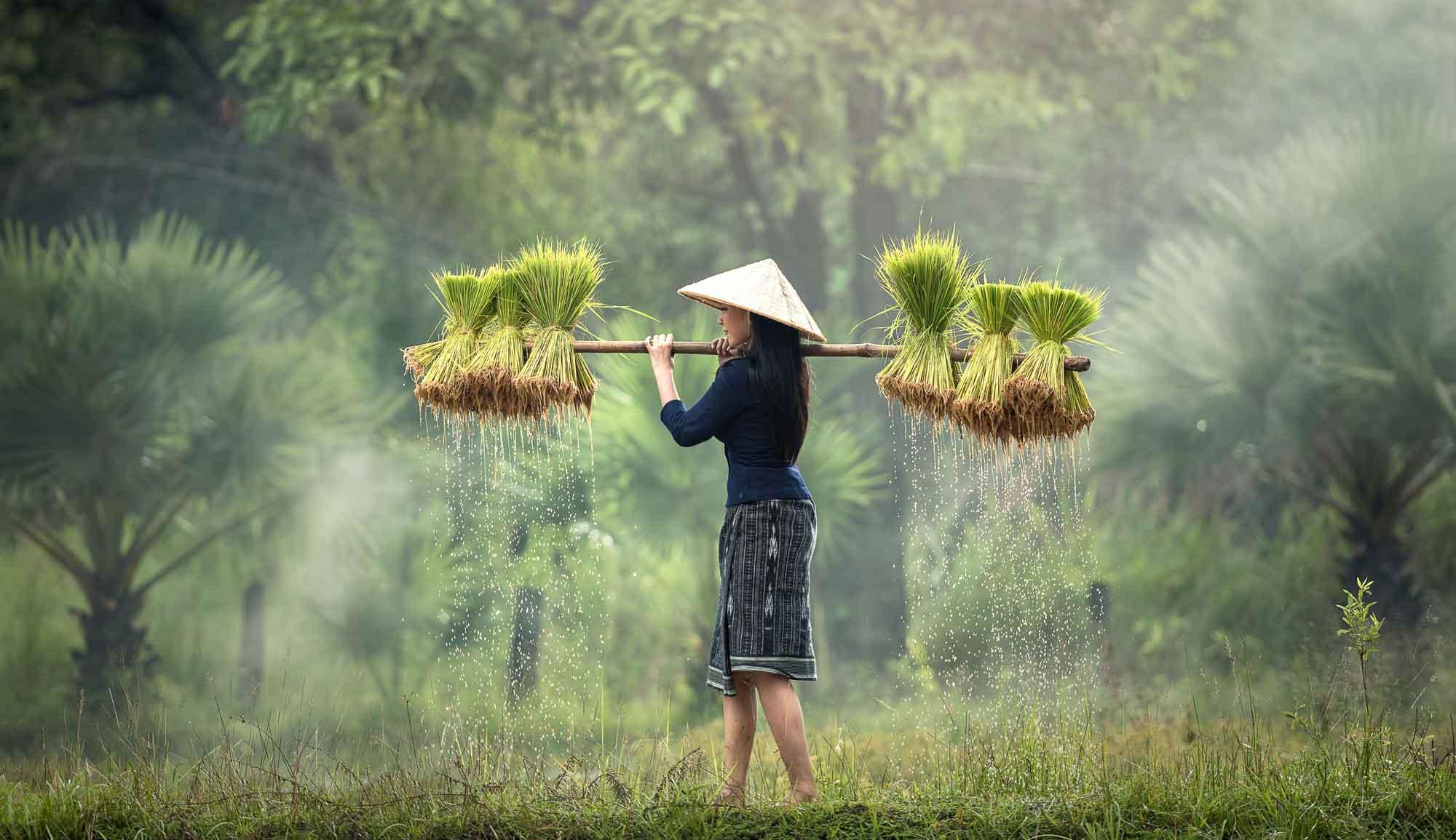 images-du-vietnam-chez-hung-05.jpg
