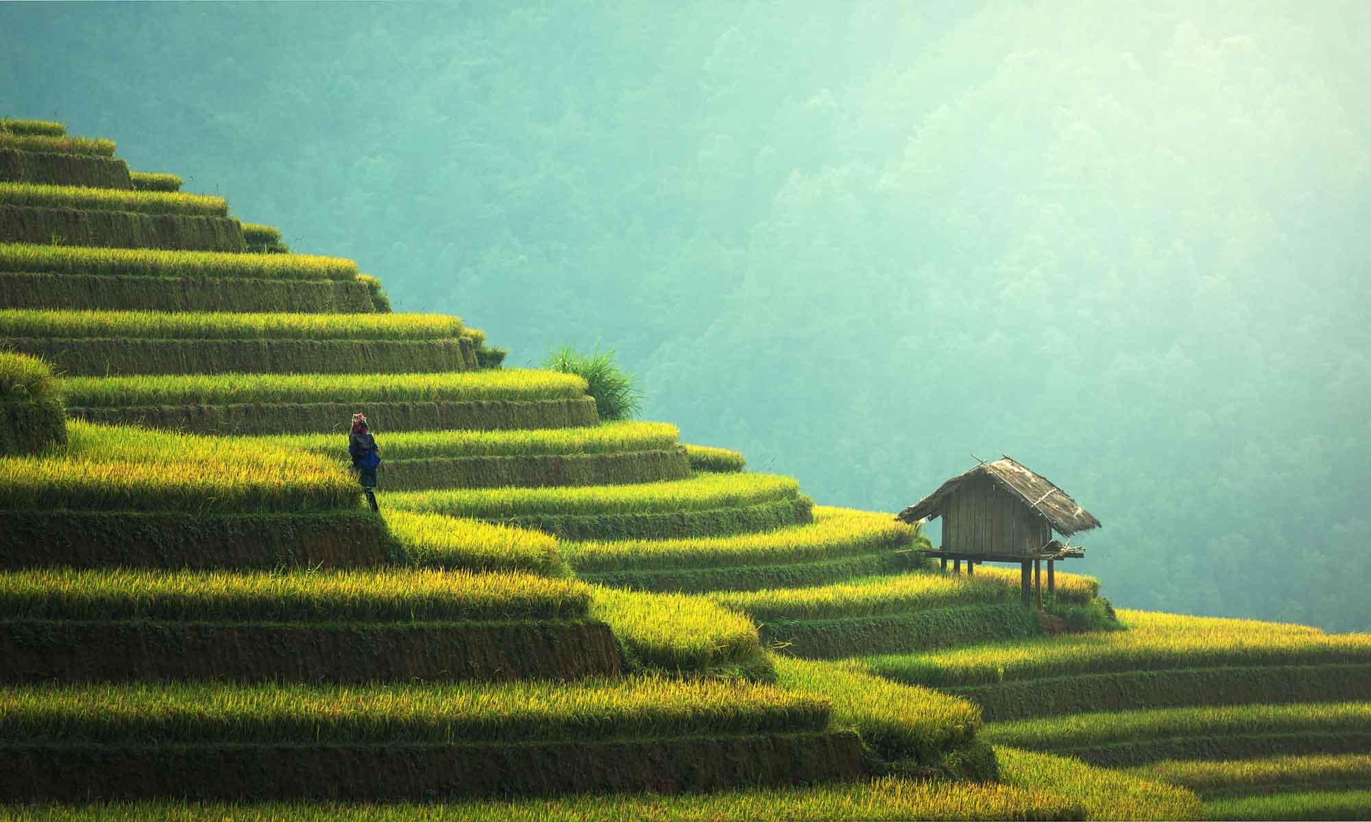 saveurs-du-vietnam-beaumont.jpg